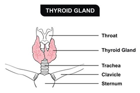 heterogeneous thyroid gland picture 7