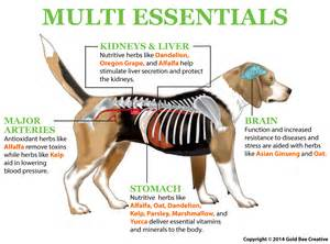 dog weight loss problems picture 1