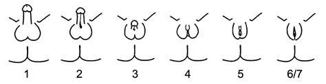 testosterone treatment wikipedia picture 3