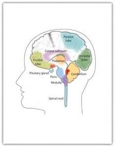 major components of the psychological aspect aging picture 9