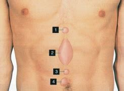 colon little knots in stomach picture 9