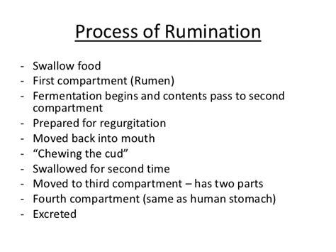 digestion in herbivores picture 6