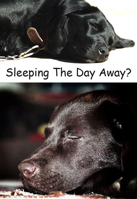 dog sleeps all day picture 5