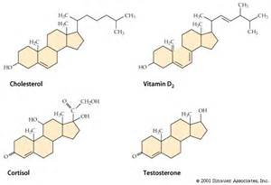 why are testosterone and estrogen considered lipids picture 1