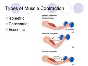 chronic muscle contraction picture 6