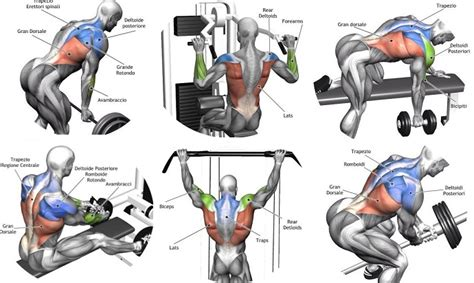 exercises for every muscle picture 1