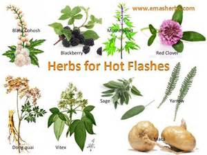 herbal remedy for hot flashes picture 15
