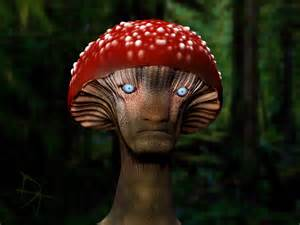 the male mushroom head picture 1