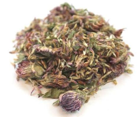 red clover breast cancer picture 10