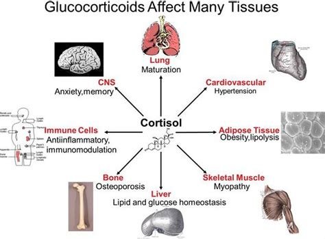 diabetes and liver function picture 3