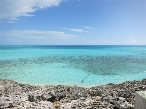 eleuthera herbal picture 7