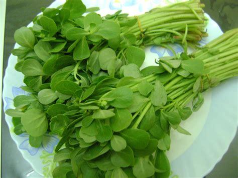fenugreek leaves picture 18
