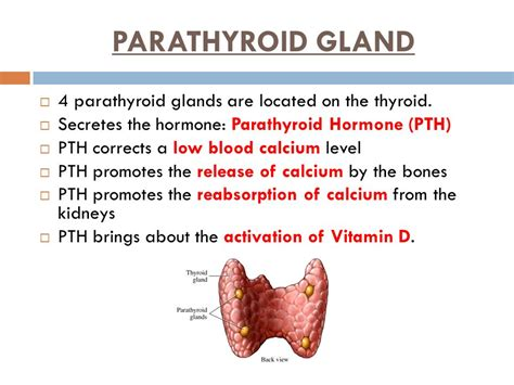 calcium and thyroid glands picture 9
