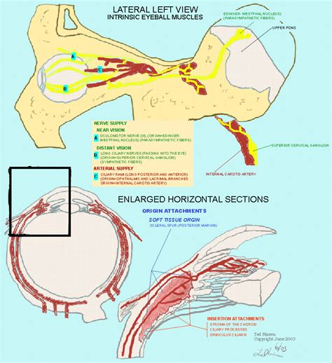 ciliary muscle and trigeminal eye pain picture 14