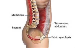 muscle pain in stomach when el movement picture 5