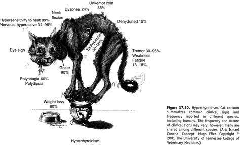 azotemic hyperthyroid cats picture 7