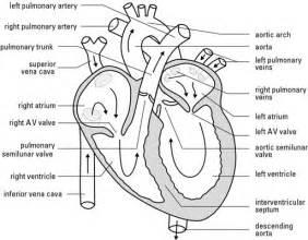 heart diagram blood flow picture 10