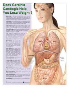 garcinia cambogia supplement benefits picture 5