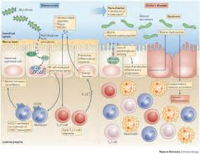 digestive inflammation picture 5