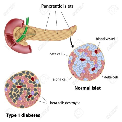 aging and pancrease picture 18