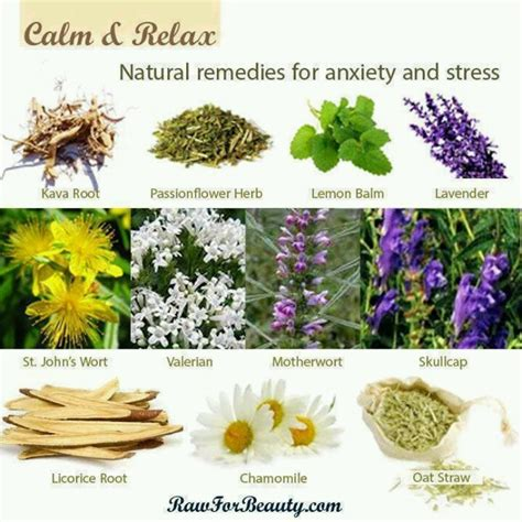 herbal plants for stress picture 2