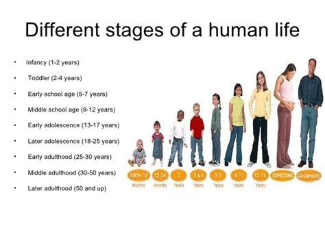 pictures of stages of aging of humans picture 2
