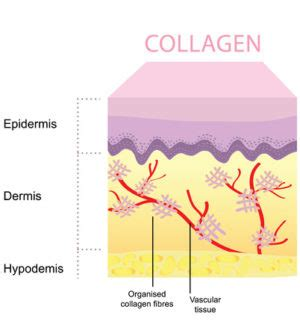 does collagen make penis thicker? picture 3