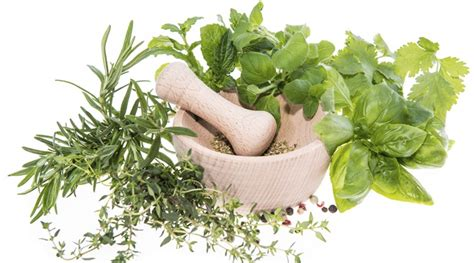 indian herbal medication can guarantor to conceive a picture 3