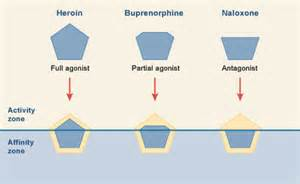 natural remedy opiate antagonists picture 6