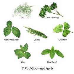 yoruba names for herbs plants and seeds picture 9