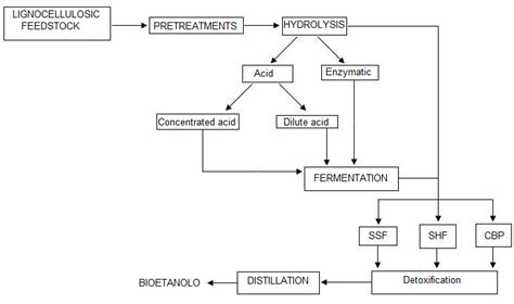 acid hydrolysis of starch picture 5