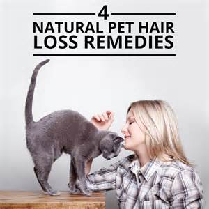 hair loss cat dog picture 2