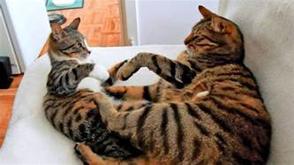 male and female peppermint cat picture 6