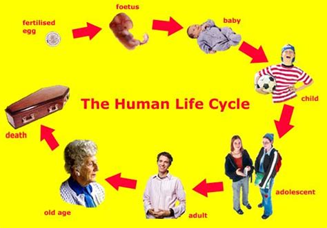 aging and retirement life cycle picture 18
