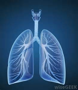 Cool...that will workbacterial lung infection picture 3
