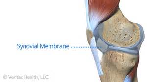 glenerohumeral joint picture 18