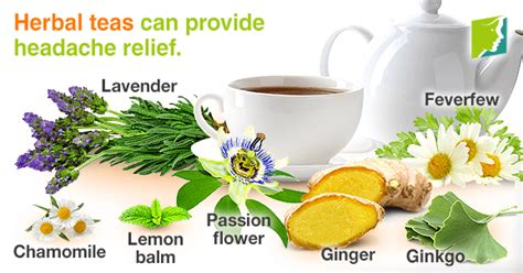 what herbal teas are safe to take while picture 10