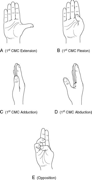 metacarpal phalangeal joint rom measurement picture 15