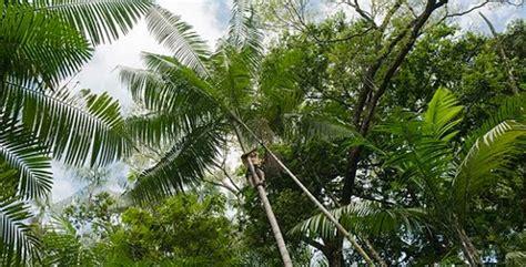acai palm florida picture 3