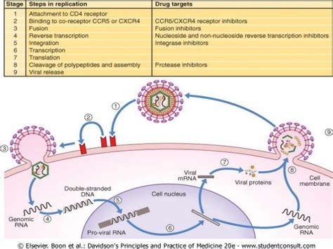 general stages of bacterial infection picture 17