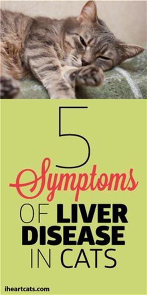 feline liver failure picture 9