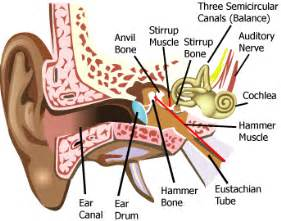 can cardizem cd cause muscle aches picture 10