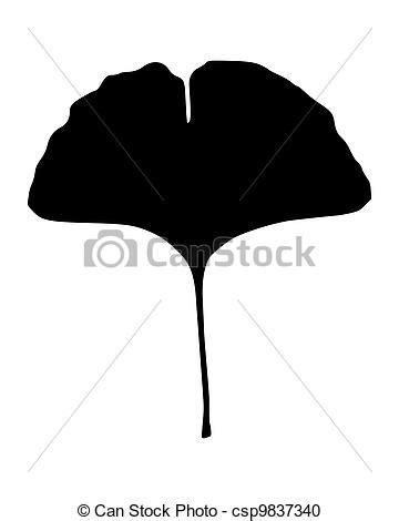 ginkgo leaf picture 7