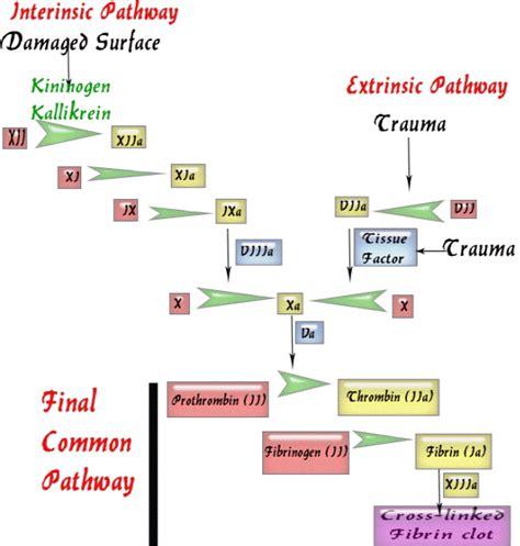 fat burners cause clotting factors picture 9