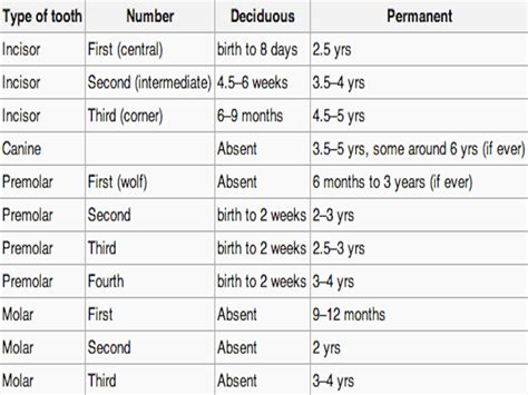 equine aging chart picture 7