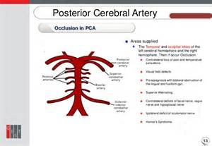 Blood vessel circulation picture 11