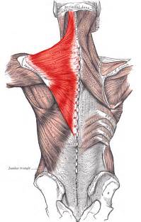 exercises for lats and wing muscle picture 5