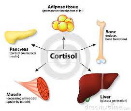 Weight gain and cortisone picture 5