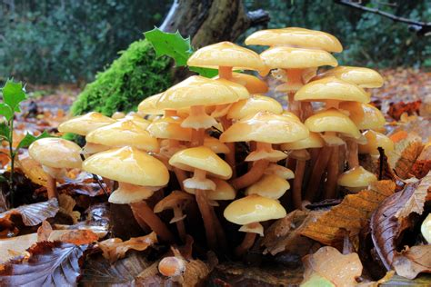 wood fungi picture 10