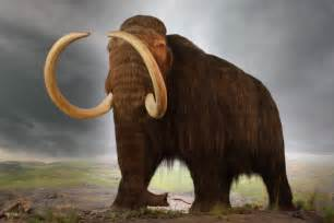 mammoth h picture 9